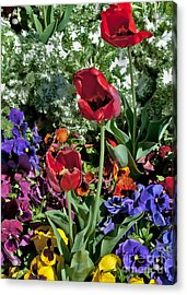 Acrylic Print featuring the photograph Poppies by Mae Wertz