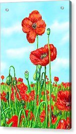 Poppies N' Pods Acrylic Print by Ric Darrell