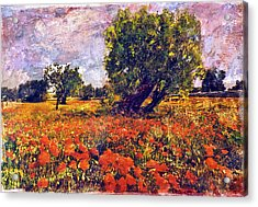 Poppies Of Puglia Acrylic Print by Steven Boone