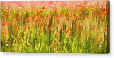 Poppies Of Tuscany IIi Acrylic Print