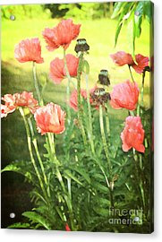 Poppies Acrylic Print by Rosemary Aubut