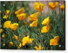 Acrylic Print featuring the photograph Poppies by Tam Ryan