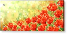 Poppies Acrylic Print by Veronica Minozzi