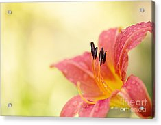 Popping Fresh Acrylic Print by Beve Brown-Clark Photography