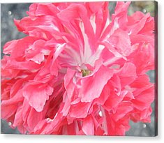 Popping Pink Acrylic Print by Brian Boyle