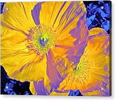 Poppy 14 Acrylic Print