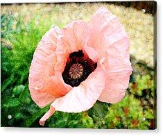 Acrylic Print featuring the digital art Poppy 2 by Helene U Taylor