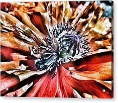 Poppy And The Bee Acrylic Print