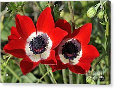 Acrylic Print featuring the photograph Poppy Anemones by George Atsametakis