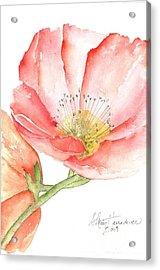 Poppy Bloom Acrylic Print