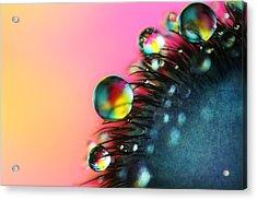 Poppy Drops II Acrylic Print by Sharon Johnstone