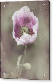 Poppy Acrylic Print by Elaine Teague