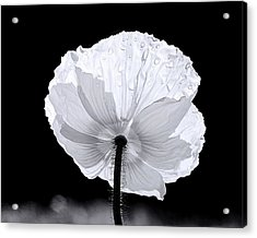 Poppy Acrylic Print by Elizabeth Budd