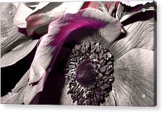 Poppy Eye Acrylic Print by Sharon Costa