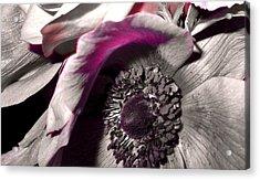 Poppy Eye Acrylic Print by Sharon Costa