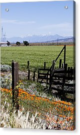 Poppy Fences Acrylic Print by Ivete Basso Photography