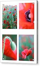 Poppy Field 1 Acrylic Print by AR Annahita