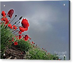 Poppy Field After Summer Storm Acrylic Print by AmaS Art