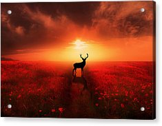 Poppy Field Dreams Acrylic Print