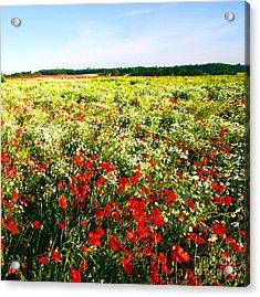Poppy Field In Summer Acrylic Print