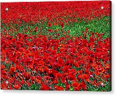 Poppy Field Acrylic Print by Jacqueline M Lewis