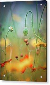 Poppy Field Acrylic Print by Steve Moore