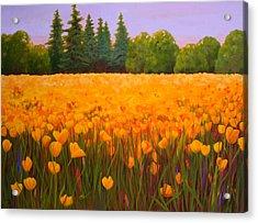 Poppy Fields Forever Acrylic Print by Nancy Jolley