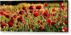Acrylic Print featuring the photograph Poppy Fields Forever by Uri Baruch