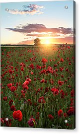 Poppy Fields Of Sweden Acrylic Print by Christian Lindsten