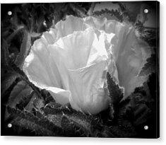 Poppy Flower 2 Acrylic Print by Heather L Wright