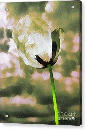 Poppy Flower In The Sky  Acrylic Print by Odon Czintos