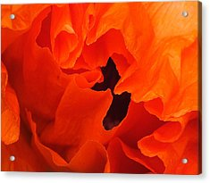 Acrylic Print featuring the photograph Poppy by Gene Cyr