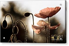 Poppy Generations Acrylic Print