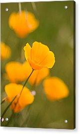 Acrylic Print featuring the photograph Poppy I by Ronda Kimbrow