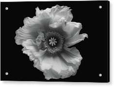 Poppy In Mono Acrylic Print by Lotte Gr??nkj??r