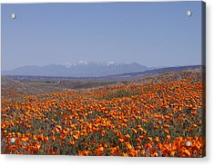 Poppy Land Acrylic Print by Ivete Basso Photography