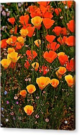 Poppy-luscious Acrylic Print