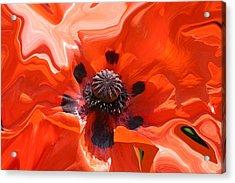 Poppy Nest Acrylic Print