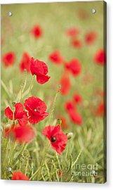 Poppy Red Acrylic Print by Anne Gilbert