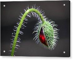 Poppy Red Lamp Acrylic Print