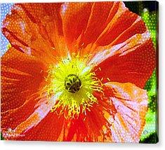 Poppy Series - Facing The Sun Acrylic Print by Moon Stumpp