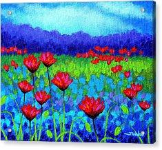 Poppy Study Acrylic Print by John  Nolan