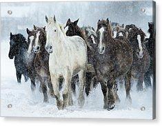 Populations Of Horses Acrylic Print by Makieni's Photo