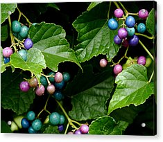 Porcelain Berries Acrylic Print by Lisa Phillips