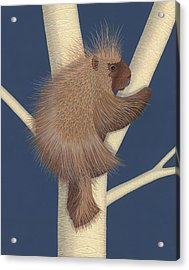 Porcupine Acrylic Print by Nathan Marcy