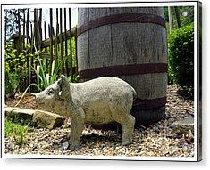 Pork Barrel Acrylic Print