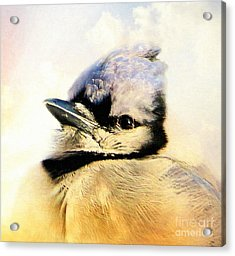 Portrait Of A Blue Jay Acrylic Print