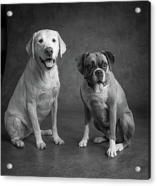 Portrait Of A Boxer Dog And Golden Acrylic Print
