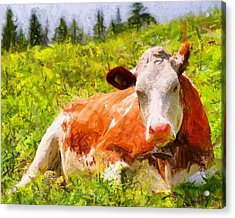Portrait Of A Cow 2 Acrylic Print by Kai Saarto