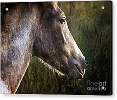 Portrait Of A Dreaming Horse Acrylic Print by Angel Ciesniarska
